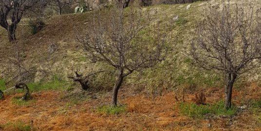 Residential plot of land in Lania village