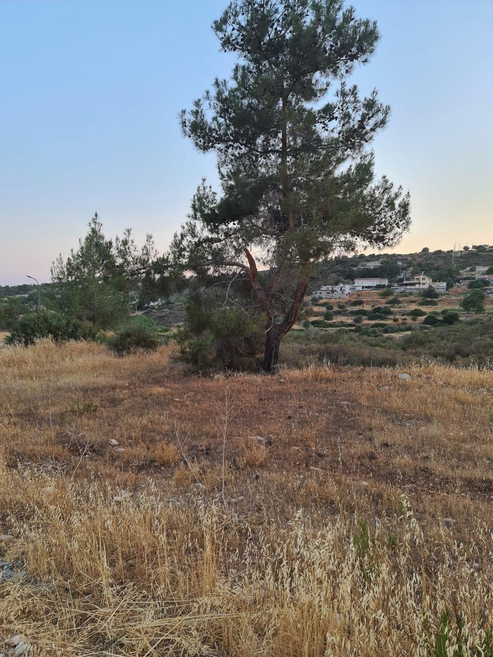 large plot of land in Souni Zanakia village
