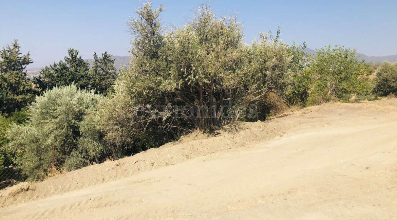 Agricultural Land In Parekklisia Village (2)