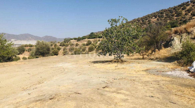 Agricultural Land In Parekklisia Village (4)