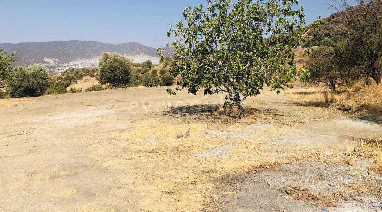 Agricultural Land In Parekklisia Village (5)
